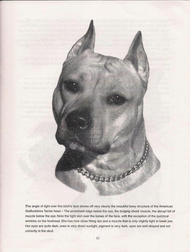 Quelle: Looking at the American Staffordshire Terrier, Breed Study STCA